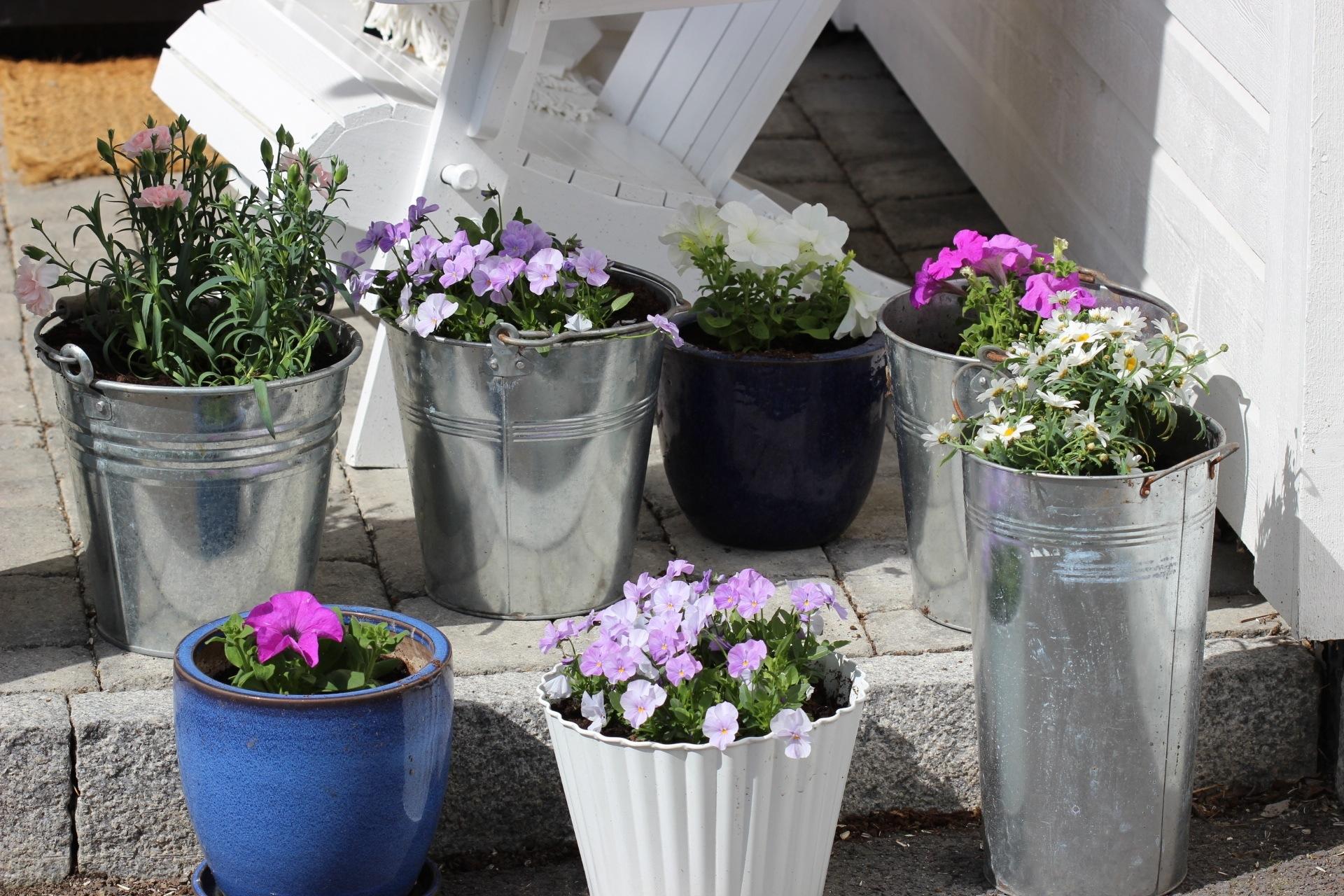 Blomster i krukker - Bodils lille blogg